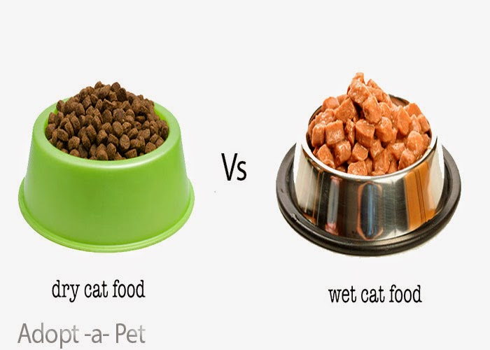 how to make dog eat dry food