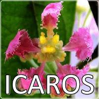 CANAL ICAROS