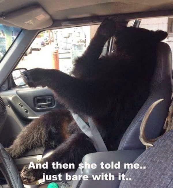30 Funny animal captions, animal pictures with funny captions, funny caption