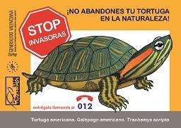 No abandones tu tortuga en la naturaleza