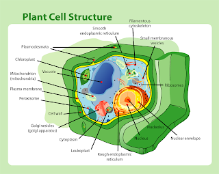 Plant_cell_structure.png