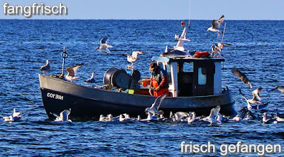 Heringstage Wismar, Wismarer Heringstage, fangfrischer Fisch, Fischkutter