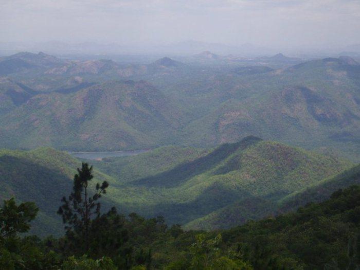 Tirpati balaji forest, Tirumala Tirupati Forest, tirupati,