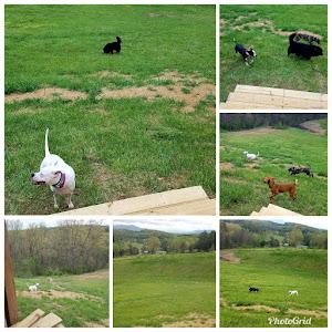 Roxie's Bark Park