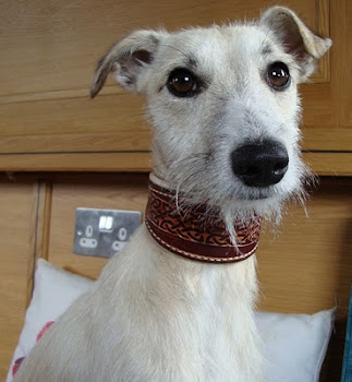 Boat&#39;s lurcher