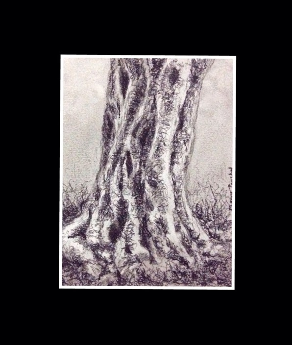 Sketching of a tree trunk in charcoal, on canson paper by Manju Panchal