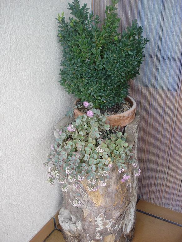 El jard n en macetas la madera en el jard n for Tinajas de barro para jardin