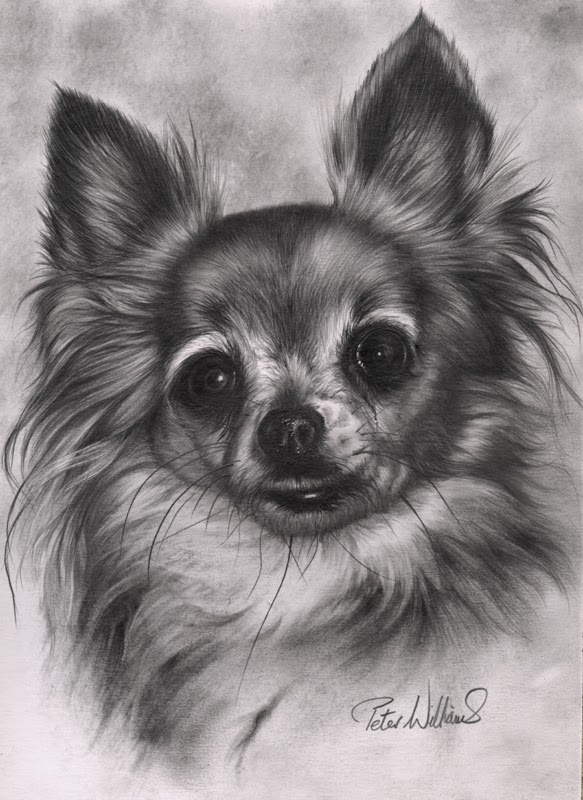 14-Chihuahua-Hyper-Realistic-Wildlife-Peter-Williams-www-designstack-co