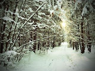 Winterlandschaft bei Schondorf am Ammersee