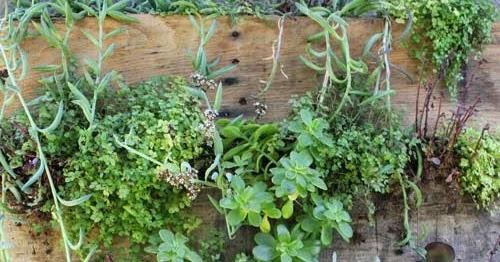 Jard n vertical barato jardines verticales y cubiertas Jardines verticales baratos