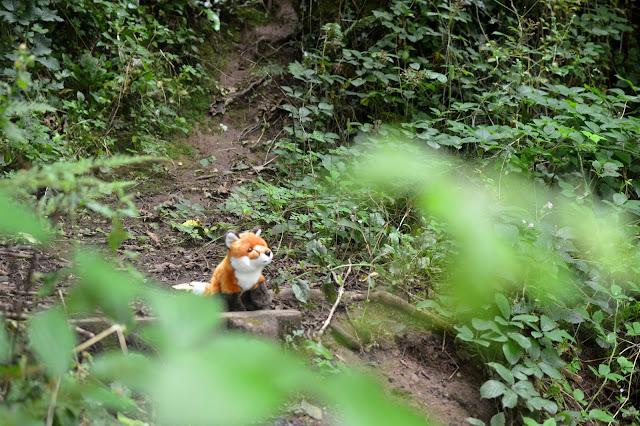 Autumn Woodland Walk Fox