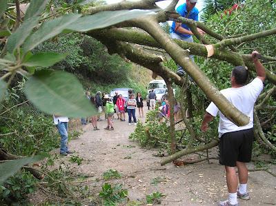 Talando árbol en la carretera, Costa Rica, vuelta al mundo, round the world, La vuelta al mundo de Asun y Ricardo, mundoporlibre.com