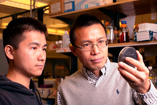 Bacteria Secret Life Revealed In Healthy Cells