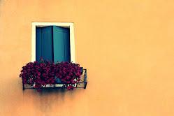 Оранжева мечта бленува за лилав цвят
