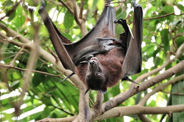 Murciélago con su cría