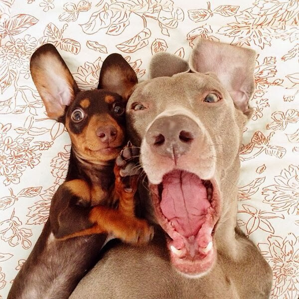 Funny animals of the week - 20 December 2013 (40 pics), dogs friend pose