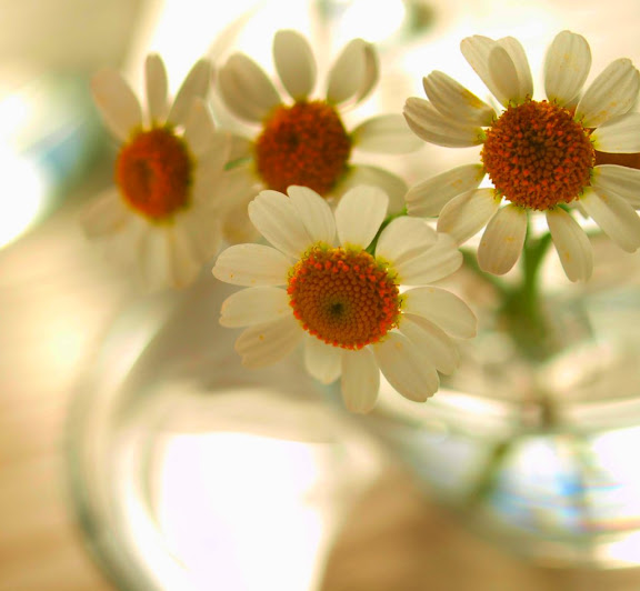Frésias. Glossário de flores - Flores. Ramos de flores