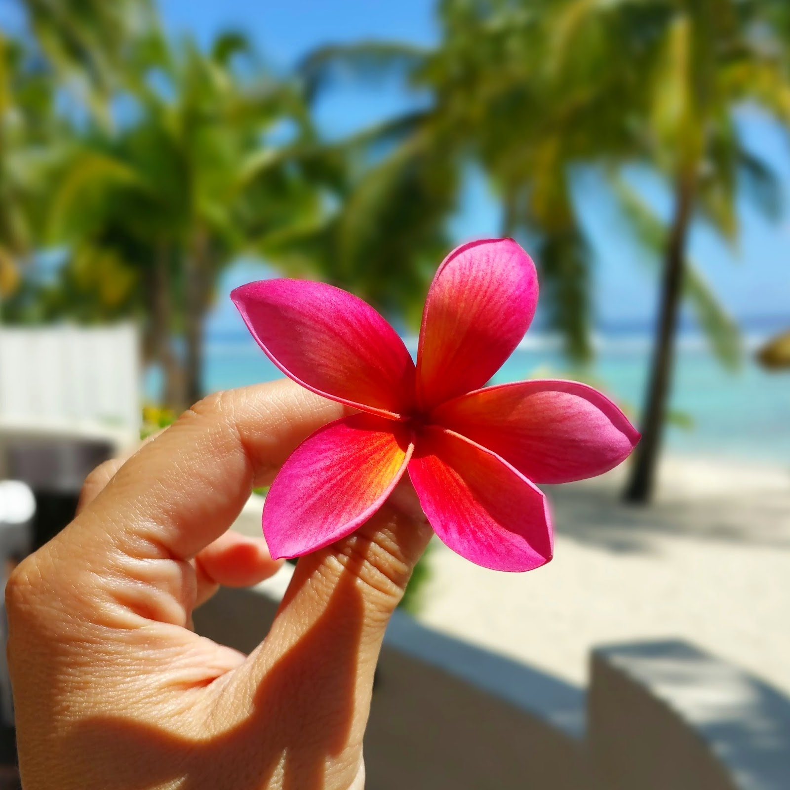 Fior di frangipani carminio - foto di Elisa Chisana Hoshi