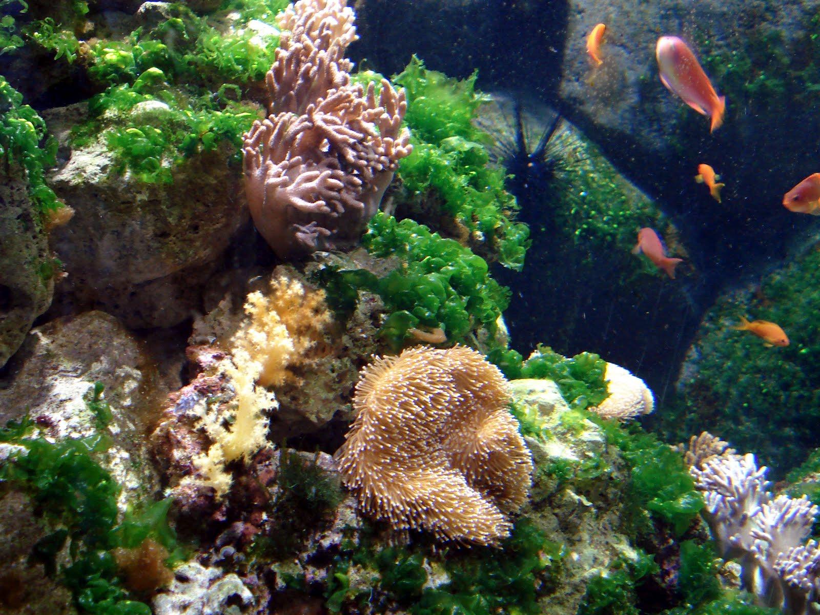 Un buzo encargado de fotografiar la fauna marina 72