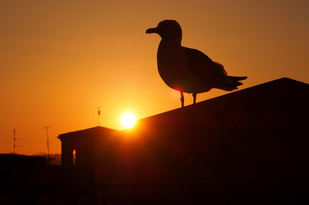 """Rom in einem anderen Licht sehen - Sonnenuntergang - """"Fee ist mein Name"""""""