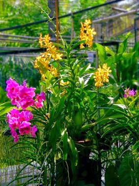orchid  nursery yellow and red plants