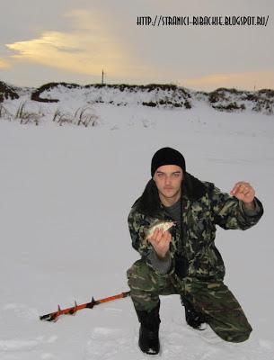 ловля окуня, зимний окунь в прудах