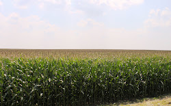 Ohio's Corn Country