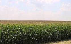 Ohio's Corn Country
