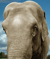 Elefant