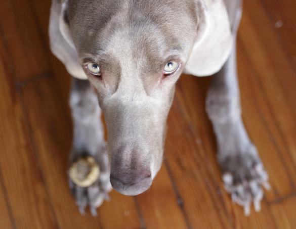 17 apart natural dog treat recipe peanut butter protein bites. Black Bedroom Furniture Sets. Home Design Ideas