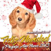 Imágenes Bonitas Navidad con fotos de Cachorritos para Twitter tarjetas postales de cachorritos para enviar amigos