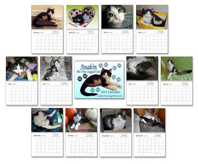 2013 Calendar Anakin The Two legged Cat Calendar