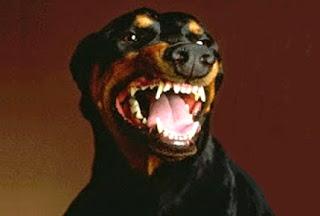 Probabilmente un cane randagio mi ha salvato la vita
