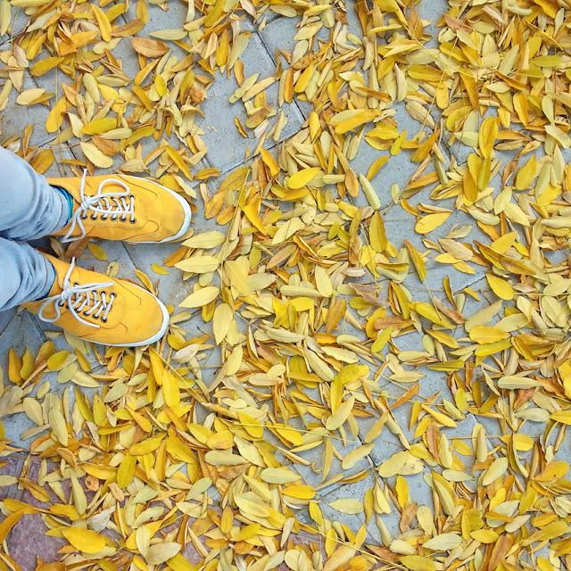 Hojas amarillas y zapatos amarillos, camuflaje