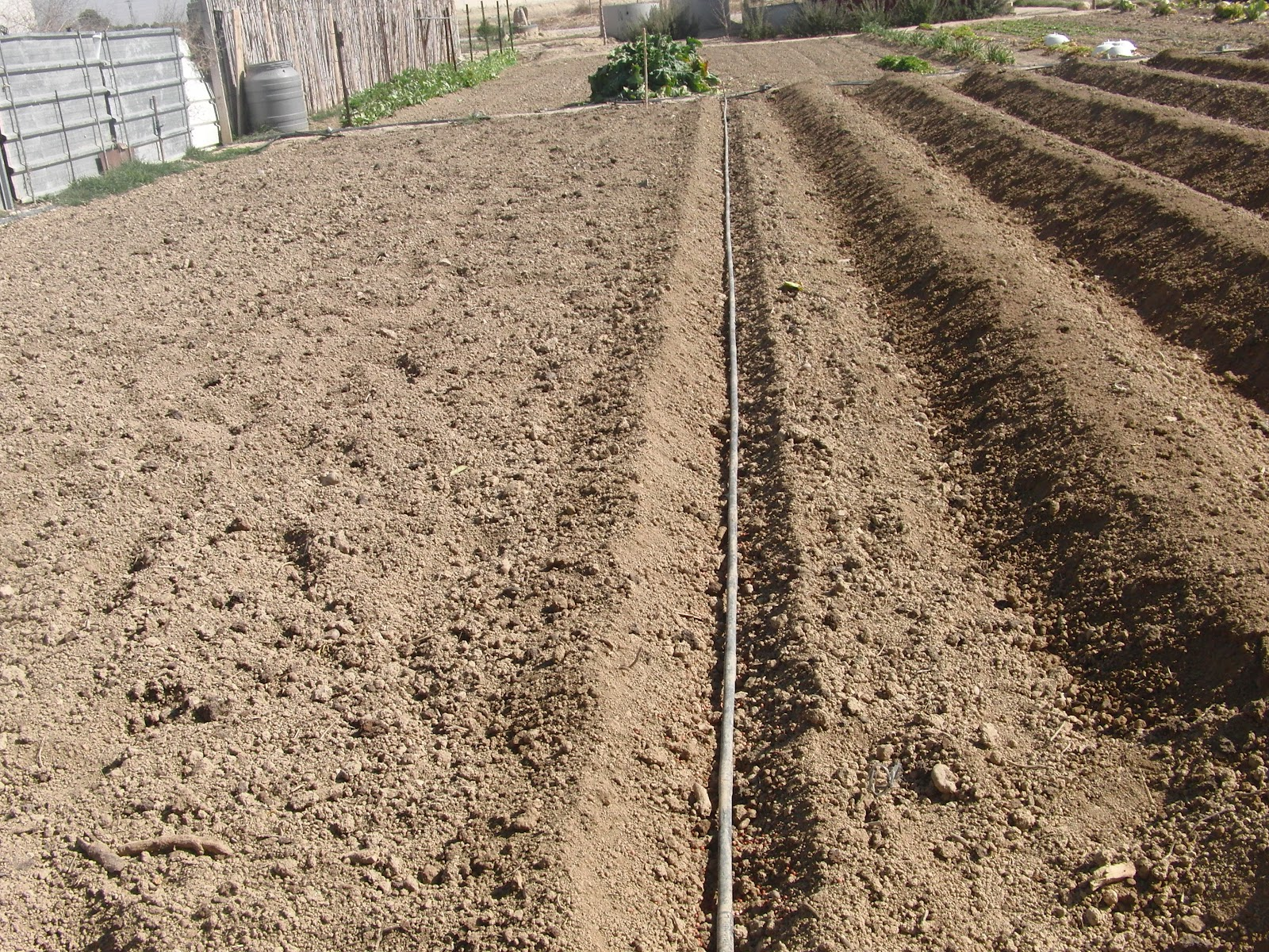 Un huerto familiar sembrar patatas 28 de febrero for Como cultivar patatas