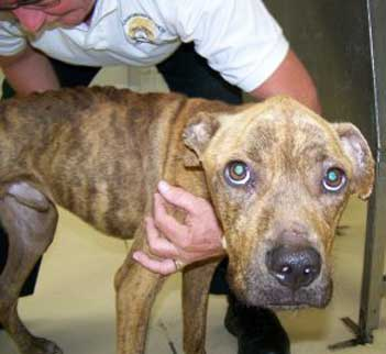 animal abuse and adult violence Animal cruelty has been a concern of the legal and psychiatric communities for many years beginning in the early 1800s, state legislatures in the united states established laws to protect the basic safety and security of animals in their jurisdictions.