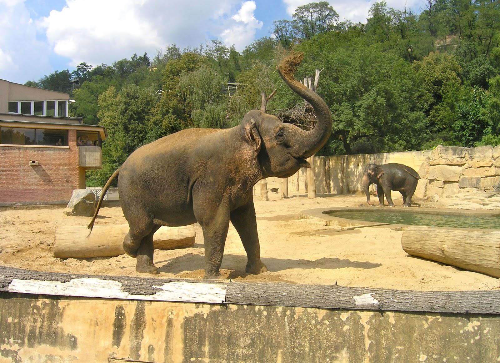 Animal Zoo Life: mammals,endangered mammals list,list of ... Hippo Definition