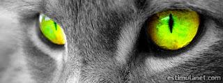 Capas para perfil do Facebook: Gato, olhar felino