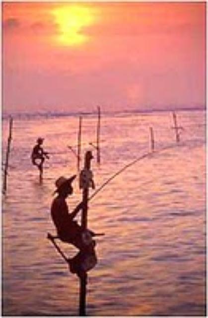 My sri lanka fishing in sri lanka for Sri lanka fishing