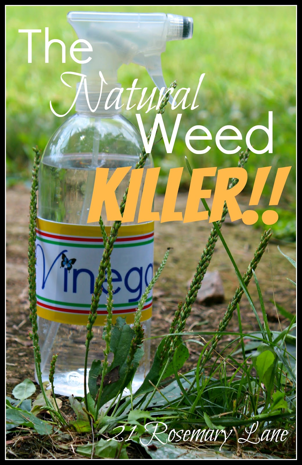 how to kill weeds without killing other plants