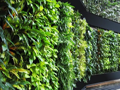 Varieties Of Philodendron Hybrids Selected For This Vertical Garden