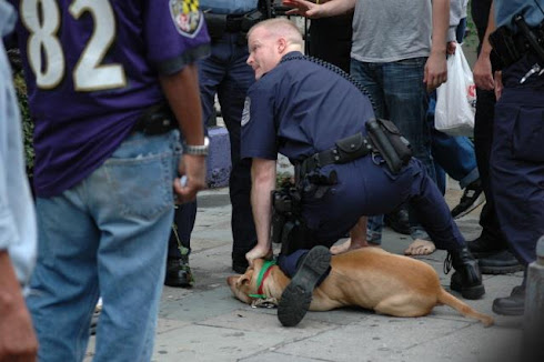 Dog out smarted cop, cop tasers dog