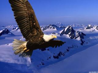 Die Herbst Tag- und Nachtgleiche 2012  Adler