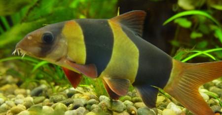 d marrer un aquarium et choix des poissons d 39 eau chaude. Black Bedroom Furniture Sets. Home Design Ideas