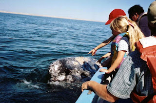 top eco tours whale watching
