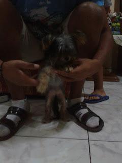 Βρέθηκε στο Περιστέρι, στον Άγιο Αντώνιο μικρό σκυλάκο, περιποιημένο και παιχνιδιάρικο