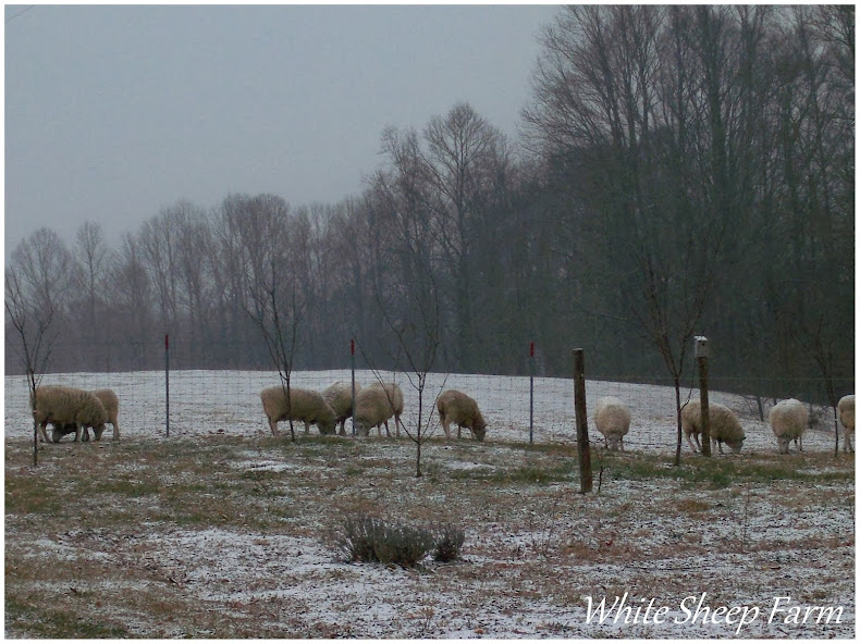 White Sheep Farm