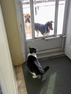 two dogs outside and cat in porch