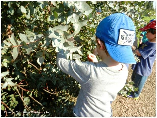 Recolectando semillas y frutos - Chacra Educativa Santa Lucía
