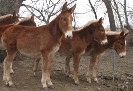 Mule | Animal Wildlife
